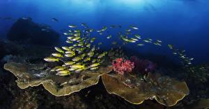 Фото Подводный мир Рыбы Кораллы Животные