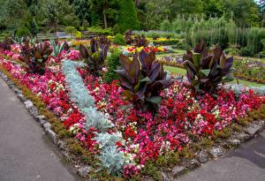 Обои Великобритания Сады Бегония Кусты Swansea Botanic Gardens Wales Природа