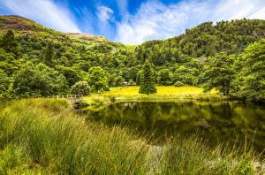 Фотография Великобритания Речка Леса Трава Ель Minffordd Wales
