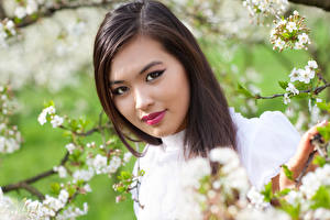 Фото Азиаты Шатенка Лицо Ветвь Красивые Девушки