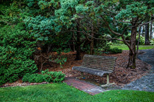 Обои Австралия Парки Скамейка Дерева Mount Lofty Botanic Garden Природа