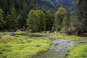 Фото Австрия Лес Деревьев Ручей Трава Gosau Природа