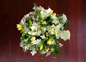 Фотографии Букеты Каллы Нарциссы цветок