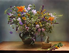 Фото Букет Ромашки Ежи Вазы цветок