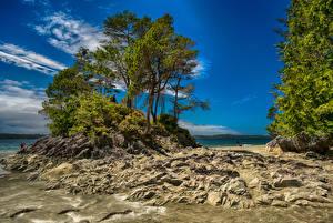 Фотография Канада Берег Деревья Tofino British Columbia
