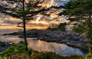 Фотографии Канада Речка Берег Деревья Ucluelet British Columbia