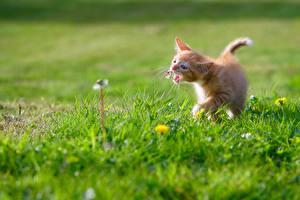 Обои Кошки Котята Рыжий Трава Животные