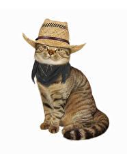 Картинки Кошка Белом фоне Шляпа Взгляд Сидит животное