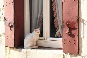 Фотография Кошки Окно Сидит Животные
