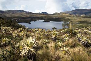 Фотография Колумбия Озеро Холмы Природа