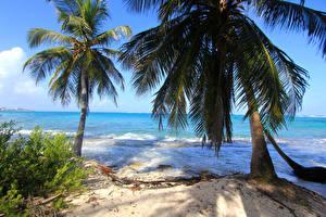 Фотографии Колумбия Тропики Берег Волны Пальмы Пляж Природа