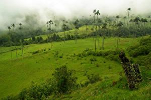Фотография Колумбия Тропики Луга Пальмы Туман
