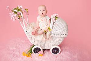 Фотографии Цветной фон Грудной ребёнок Смотрит Ребёнок