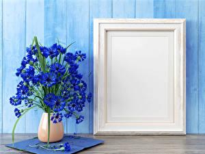 Фото Васильки Ваза Синий Цветы