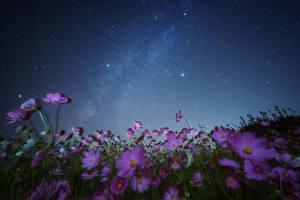 Фото Космея Небо Звезды Ночные