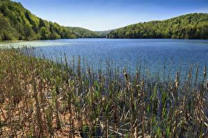 Обои Хорватия Парки Озеро Леса Plitvice national park Природа картинки