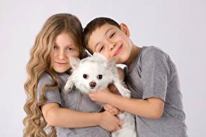Картинка Собаки Серый фон Мальчики Девочки Чихуахуа Улыбка Ребёнок Животные