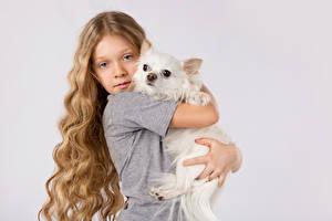 Фотография Собаки Серый фон Девочки Русые Волосы Чихуахуа Смотрит Объятие Ребёнок