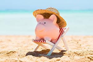 Обои Домашняя свинья Пляж Кресло Шляпа Сувенир