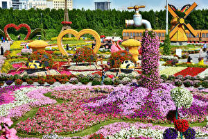 Картинка Дубай Сады Петунья Дизайн Miracle Garden Природа