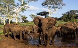 Фото Слоны Детеныши Вода