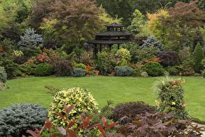 Фотография Англия Сады Пагоды Газон Кусты Walsall Garden Природа