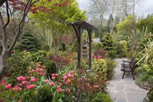 Картинка Англия Сады Тюльпан Кусты Скамья Walsall Garden Природа
