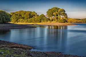 Картинки Англия Озеро Побережье Деревьев Killington Lake Природа