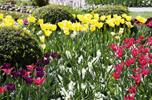 Обои Германия Сады Тюльпаны Konstanz