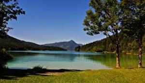 Обои Германия Озеро Леса Побережье Бавария Деревья Niedernach Природа картинки
