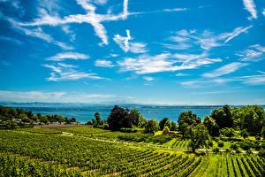 Фото Германия Пейзаж Озеро Поля Небо Кусты Lake Constance Hagnau