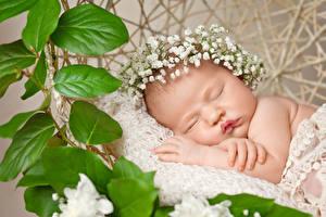 Картинки Грудной ребёнок Спящий Листва