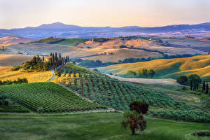 Картинка Италия Тоскана Пейзаж Поля Холмы Деревья