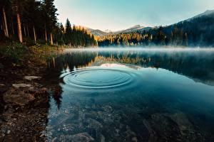 Обои Озеро Вода Утро Тумане Круги Природа