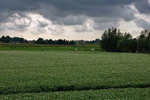 Фотография Нидерланды Поля Kolhorn
