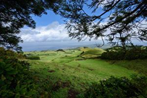 Картинка Португалия Луга Холмы Ветвь Azores Природа