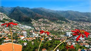 Фотография Португалия Здания Холмы Madeira Camara de Lobos
