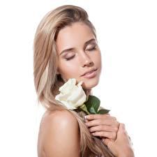 Обои Розы Блондинка Белый фон Красивые Девушки картинки