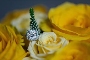 Картинка Розы Крупным планом Алмаз обработанный Желтая Кольцо Цветы
