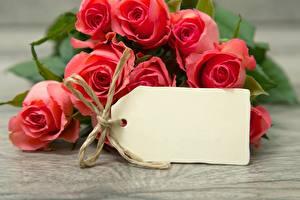 Обои Розы Крупным планом Шаблон поздравительной открытки Цветы
