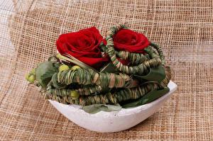 Фотографии Розы 2 Дизайн Красный Цветы