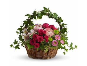 Фотография Розы Белый фон Корзина Дизайн Цветы