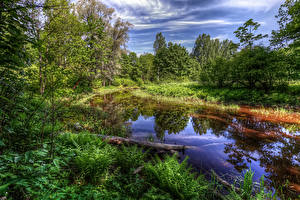 Картинка Россия Санкт-Петербург Парки Пруд Деревья Трава HDRI Nevsky Forest Park Природа