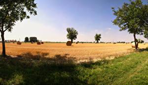 Картинки Пейзаж Поля Трава Сено