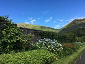 Картинки Шотландия Гортензия Холмы Кусты Argyll and Bute Природа