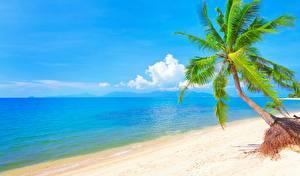 Фотографии Море Пляжи Пальмы Дерева Горизонт Природа