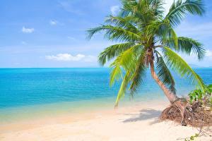 Картинка Море Пальма Пляжи Деревья Горизонт Природа