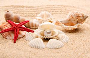 Картинка Ракушки Жемчуг Морские звезды Песок