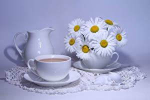 Фотография Натюрморт Букеты Ромашки Напитки Цветной фон Кувшин Чашка Еда Цветы