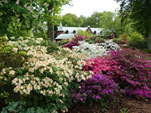 Фотографии Швеция Сады Рододендрон Кусты Sofiero Castle Gardens Helsingborg Природа